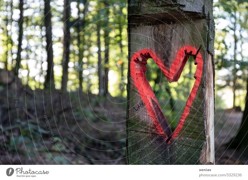 Heart in the forest Environment Nature Landscape Tree Forest Wood Sign Brown Green Red Sawn xenias Colour photo Exterior shot Detail Deserted Copy Space bottom