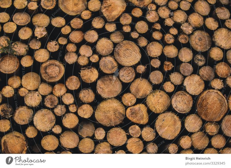 tree trunks Environment Nature Winter Climate Climate change Tree Forest cubic metre Annual ring Todholz kiln Fireside Wood Happy Contentment