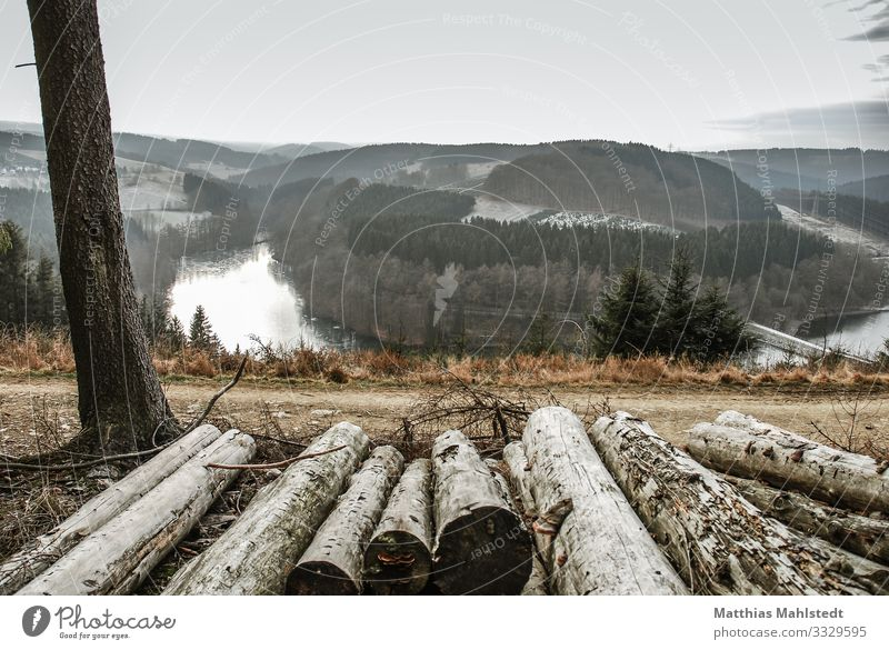 View into the valley Environment Nature Landscape Winter Snow Tree Forest Lakeside River dam Versetalsperre Natural Gray Far-off places unsaturated Colour photo
