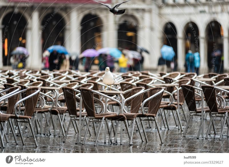Rain in Venice Weather Bad weather Wind Places Piazza Venezia St. Marks Square Bird Pigeon Seagull Gull birds Chair Umbrella Cold Wet Disappointment Loneliness