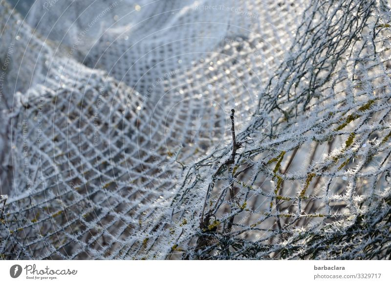 Winter network Plant Ice Frost Garden Fence Net Bright Cold White Climate Nature Network Protection Subdued colour Exterior shot Close-up Detail Abstract