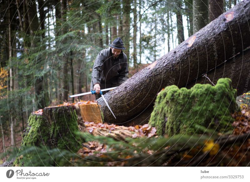 lumberman Work and employment Workplace Agriculture Forestry Nature Landscape Animal Tree Lumberjack Forester Tree felling ranger Coniferous forest Woodcutter