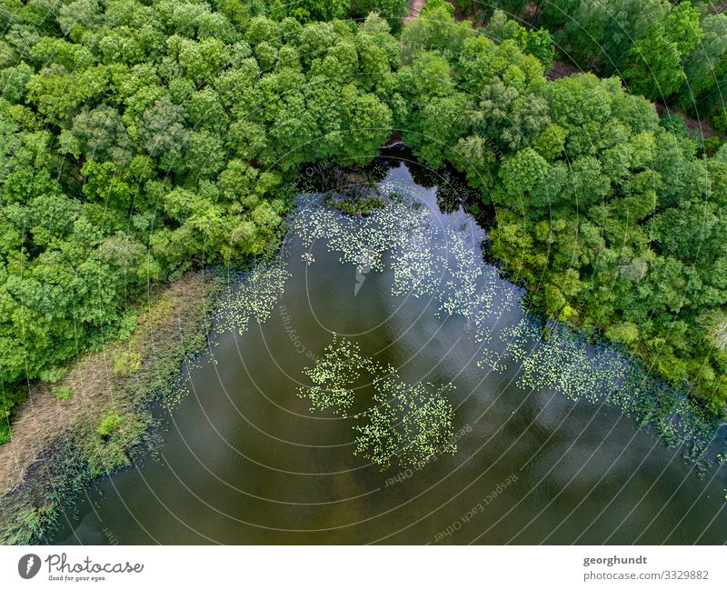 Forest puddle corner Healthy Fishing (Angle) Hunting Swimming & Bathing Hiking Environment Nature Landscape Plant Animal Summer Lakeside River bank Bay Island