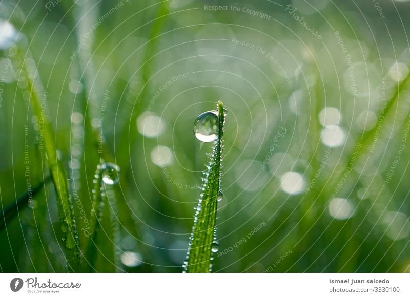 rain drop on the green grass in rainy days plant leaf leaves drops raindrop water wet shiny bright garden floral nature natural foliage abstract textured