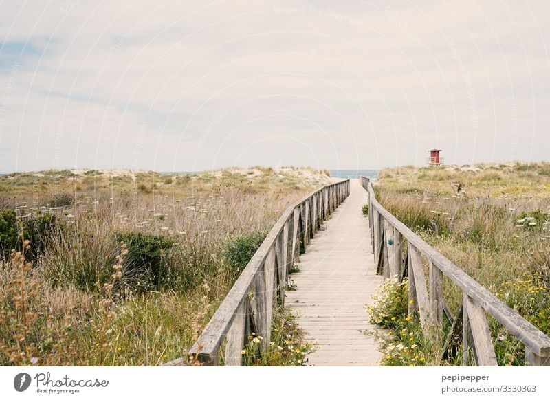 Way to the beach Vacation & Travel Tourism Trip Far-off places Freedom Summer vacation Beach Ocean Island Waves Dune Aquatics Environment Nature Landscape Sand