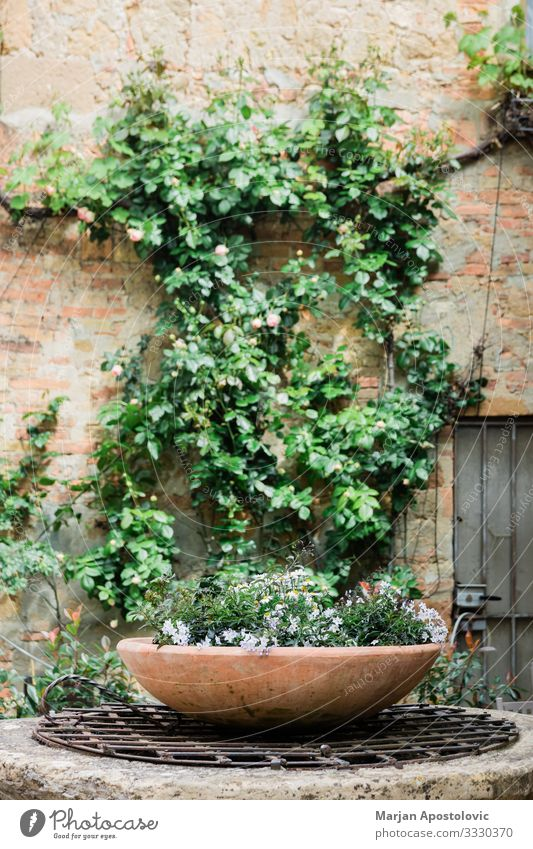 Pot of beautiful flowers in rustic garden in spring Plant Spring Summer Flower Garden Italy Village Old town Wall (barrier) Wall (building) Natural