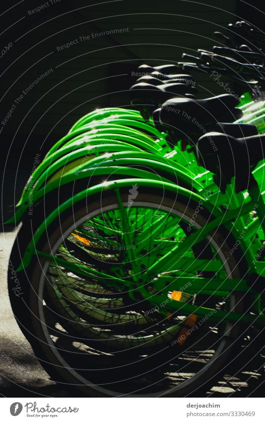 Bicycles all in green. You can only see the rear wheels or the saddles. Design Life Fitness Sports Training Cycling Environment Summer Beautiful weather