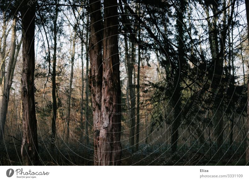 forest Tree Forest Dark Tree trunk Forest death Nature Deserted Gloomy Colour photo Exterior shot Day