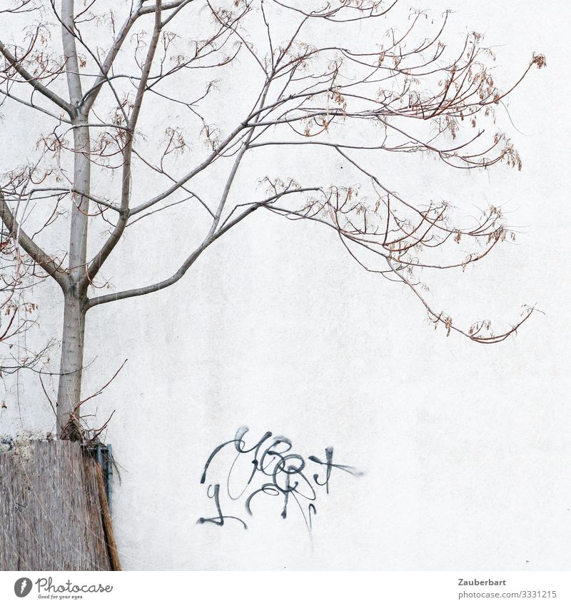 Filigree tree, wall and graffiti Graffiti Tree Berlin House (Residential Structure) Wall (barrier) Wall (building) Sign Stand Gray Modest Exhaustion Bizarre