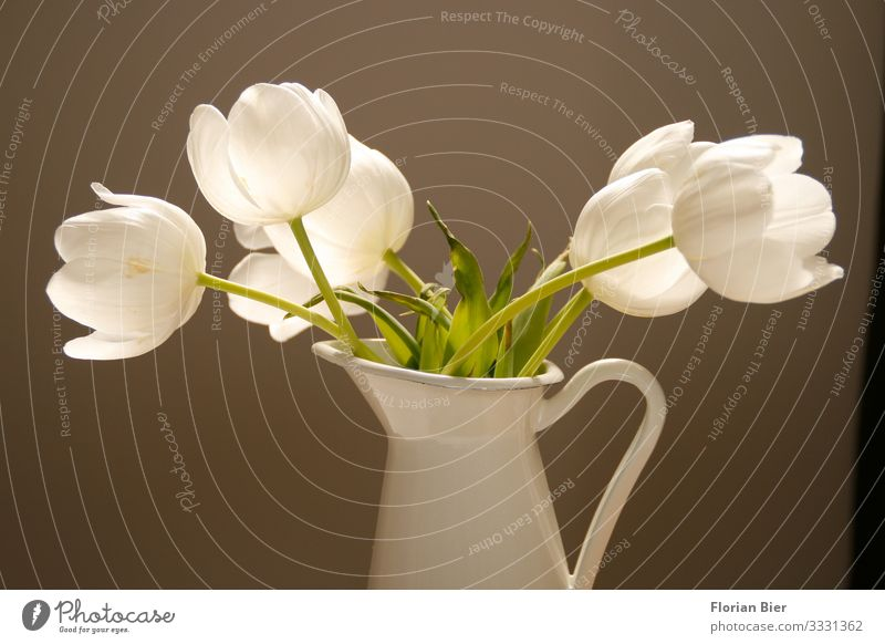 still lifes Spring Plant Tulip Vase Metal Blossoming Fragrance Esthetic Healthy Beautiful Happy Warm-heartedness Friendship Together Romance Desire Compassion