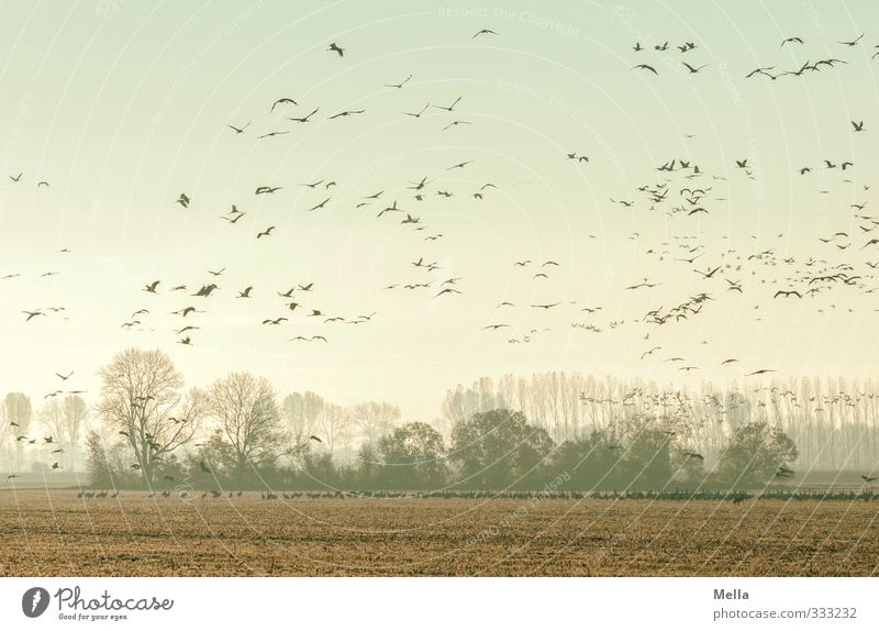 Withdrawn Environment Nature Landscape Animal Tree Clump of trees Field Wild animal Bird Crane Flock Flying Stand Free Together Natural Many Movement Freedom