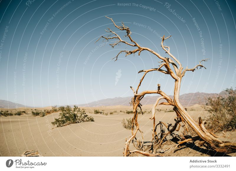 View of death tree and bushes in desert dune view landscape sky dead dry nature usa journey travel day vacation summer state panorama america resort scenic