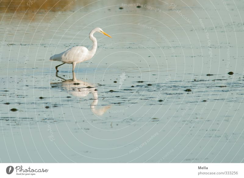 Nature Blue Water White Landscape Calm Animal Environment Lake Natural Going Bird Wild animal Search Pond Stride