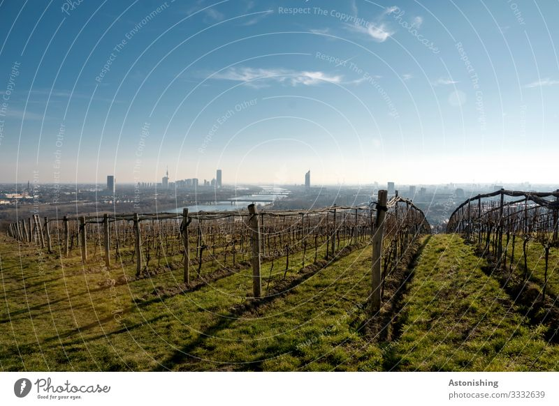 View of Vienna Environment Nature Landscape Plant Air Sky Clouds Horizon Autumn Weather Beautiful weather Bushes Agricultural crop Vine Meadow Hill River Danube