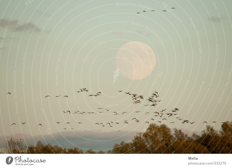 Sky Nature Tree Landscape Animal Environment Freedom Natural Air Bird Together Flying Wild animal Treetop Moon