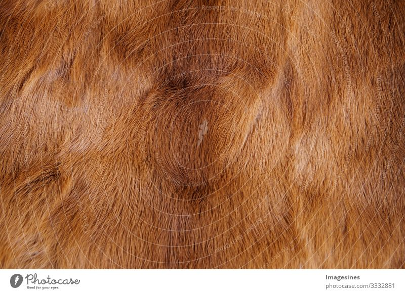 Animal fur background. Texture of fur. Animal world concept and style. Textures and backgrounds. Close up, full frame of fur coat Fur coat Pelt Soft Brown Style