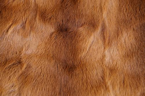 "Animal fur Fur coat Pelt Soft Brown Style ""Animal fur background texture animal world concept textures backgrounds Close-up full frame fur coat,"" ""fur coat"
