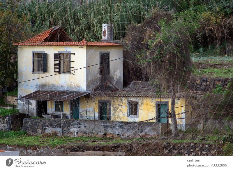 The ravages of time Portugal Madeira Funchal House (Residential Structure) Old Derelict Redecorate Modernization Past Decline Ruin Country house Villa