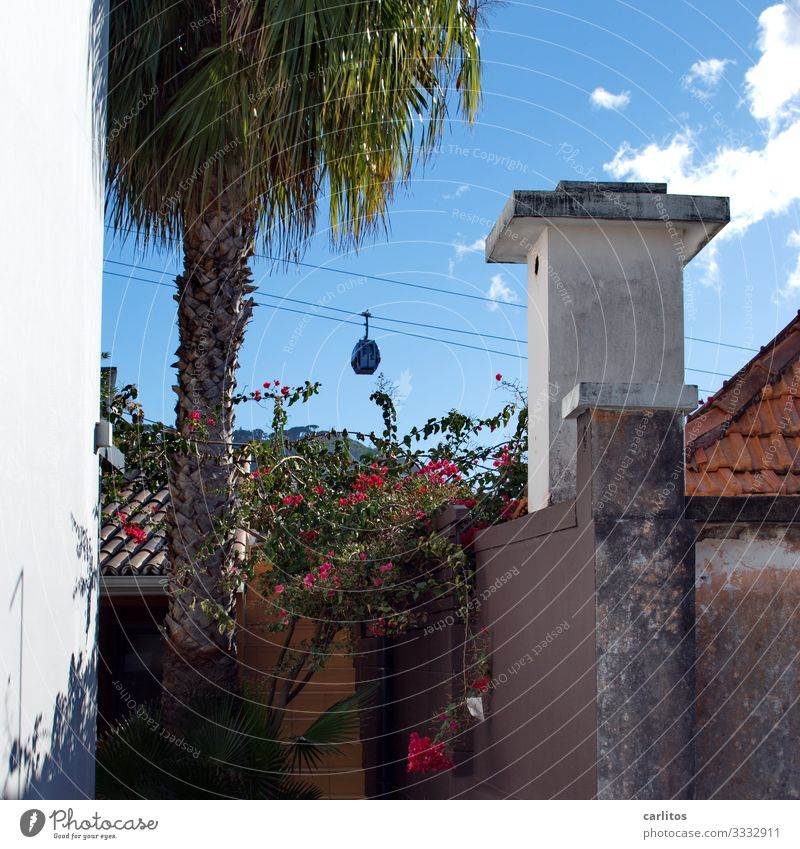 Funchal | Cable car to Monte Portugal Madeira Old town Gondola Vantage point monte Botanical gardens Tourism Vacation & Travel Palm tree Chimney Vacation home