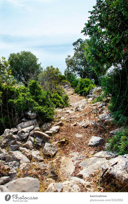 Hiking Path in Cilento National Park, Campania, Italy Beautiful Calm Vacation & Travel Sports Nature Landscape Sky Tree Forest Coast Lanes & trails Blue Idyll
