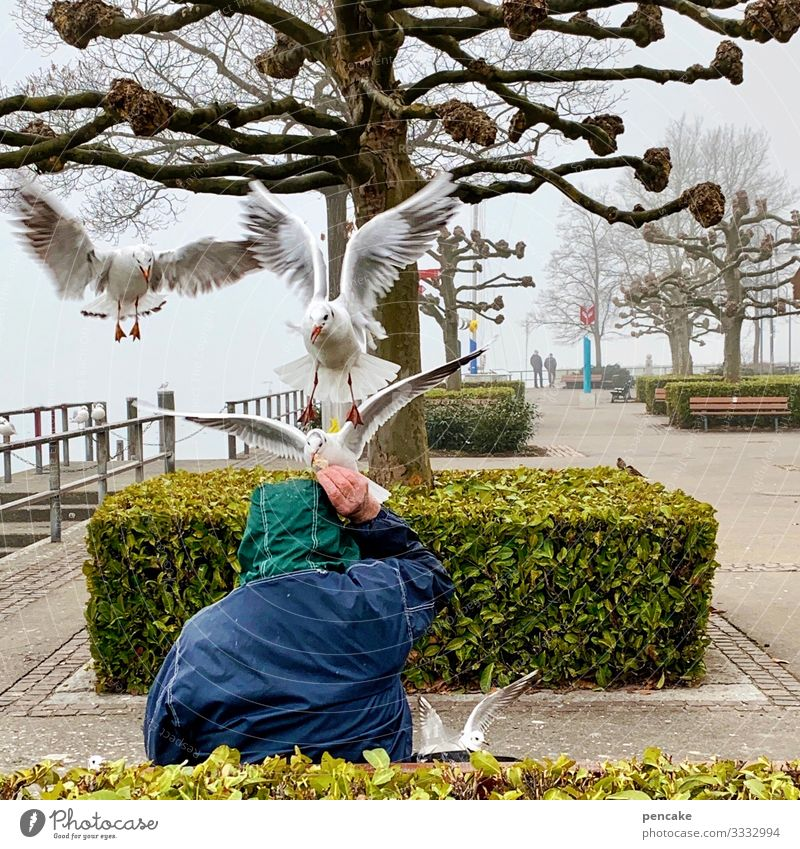 Human being Nature Water Landscape Tree Animal Movement Playing Bird Flying Leisure and hobbies Park Communicate Wild animal Group of animals Bushes