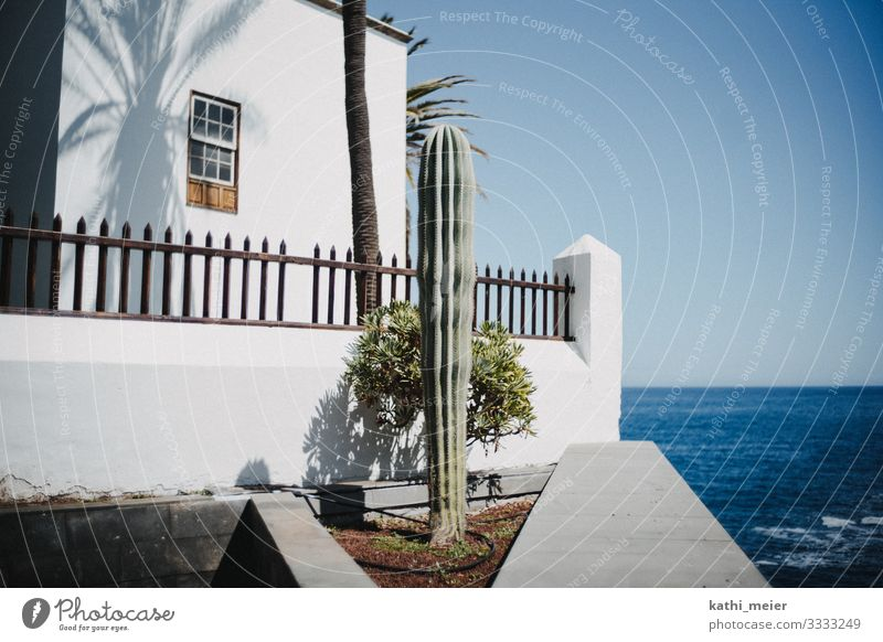 He stands Environment Climate Climate change Beautiful weather Cactus House (Residential Structure) Happiness Fresh Hot Bright Blue Green Turquoise White