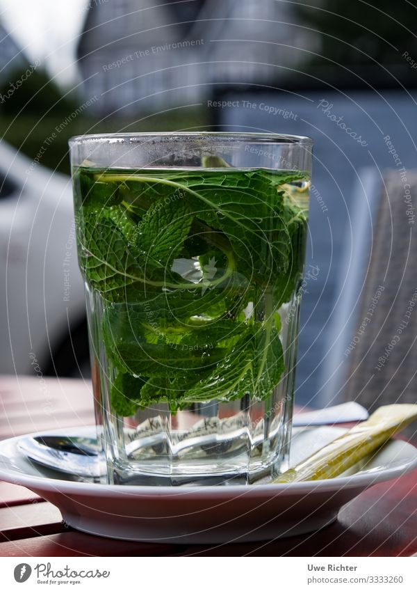 Fresh peppermint in a glass Food Nutrition Organic produce Vegetarian diet Beverage Hot drink Tea Glass Style Health care Mint Mint leaf Contentment Energy