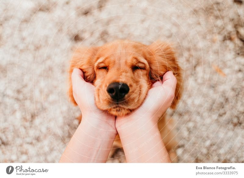 woman holding head of cute puppy cocker spaniel dog. love for animals concept Woman Dog Pet Park Sunbeam Exterior shot Love Embrace Smiling Kissing Breed