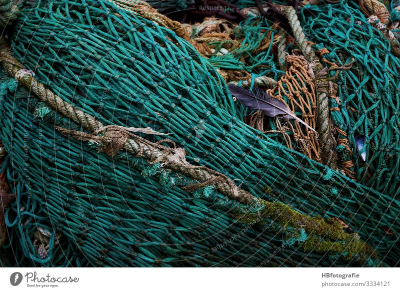 net Net Catch Green Fishing net Feather Fishery Fisherman Colour photo Exterior shot Abstract Pattern Structures and shapes