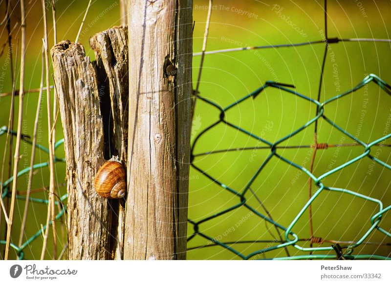 snail Fence Green Wood Snail shell Detail