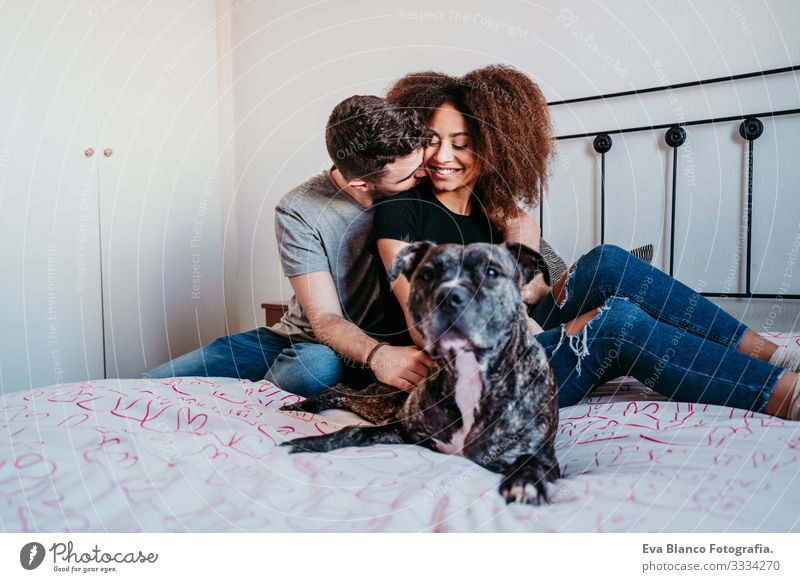 happy couple in love at home. Afro american woman, caucasian man and their pit bull dog together. Family concept Couple Love African-American Ethnic Woman Home