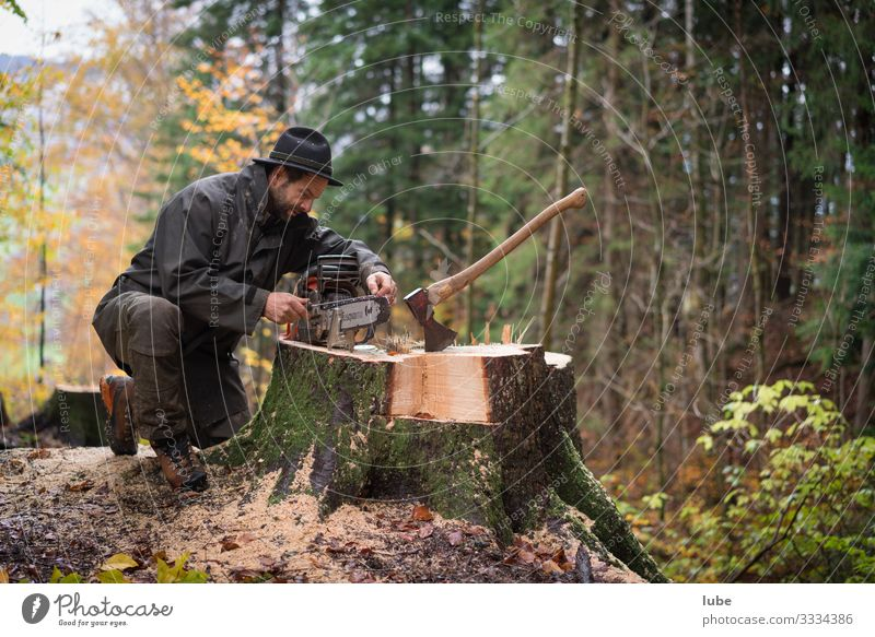 Lumberjacks 2 Work and employment Profession Agriculture Forestry Man Adults Environment Nature Tree Forester Woodcutter Tree felling ranger Colour photo