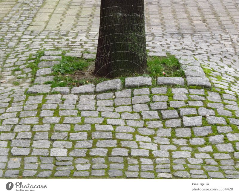 habitat Plant Earth Tree Town Downtown Cobblestones Growth Small Brown Gray Green Nature Survive Environment Grass Tree trunk Colour photo Exterior shot