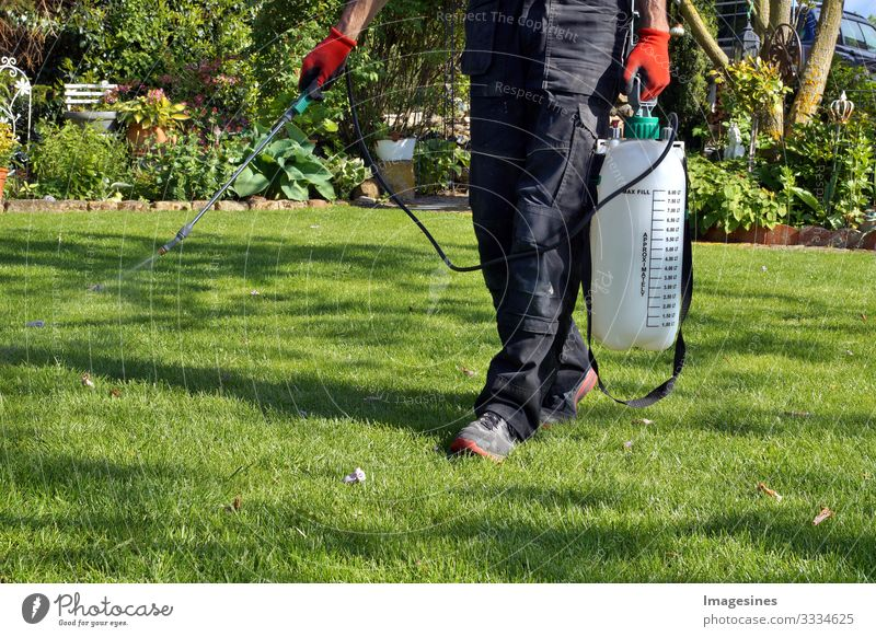 Spraying pesticides with a portable sprayer to eliminate weeds from the lawn. Weed killer spray on the weeds in the garden. Pesticide use is harmful to health. Weed control concept. Weed killer