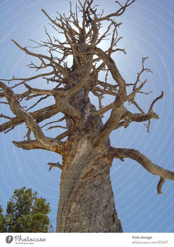 tree lights Tree Blue sky Sun Bryce Canyon Death dead America