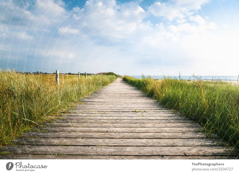 Wooden footpath and high grass in sunlight. Sylt landscape Summer Hiking Beautiful weather Coast North Sea Bridge Lanes & trails Perspective Frisian island