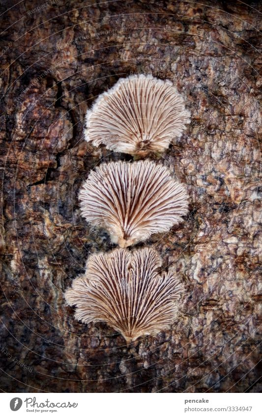 cleavage leaflets Nature Plant Tree Forest Discover Esthetic Exceptional Small Bizarre Whimsical Mushroom Tree fungus Slit leaflets 3 Lamella Winter Tree bark