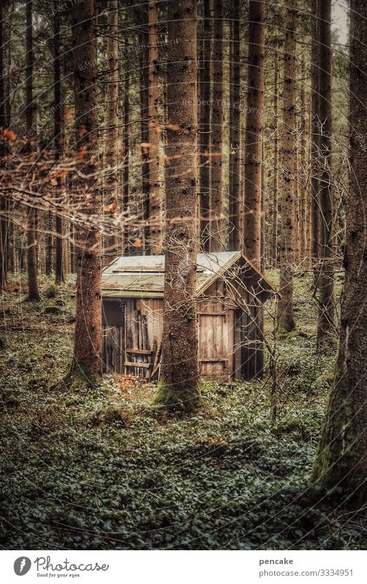 hermit | corona thoughts Hut Forest Hermit Nature Retreat retreat Diogenes Lonely trees on one's own Landscape Exterior shot Environment Calm Colour photo
