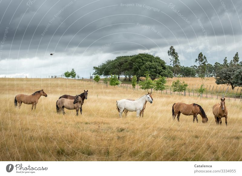 The herd of horses stands in the high grass of a pasture, thunderclouds are gathering, a bird flies by. herds of horses Farm animal Willow tree Grass birds huts