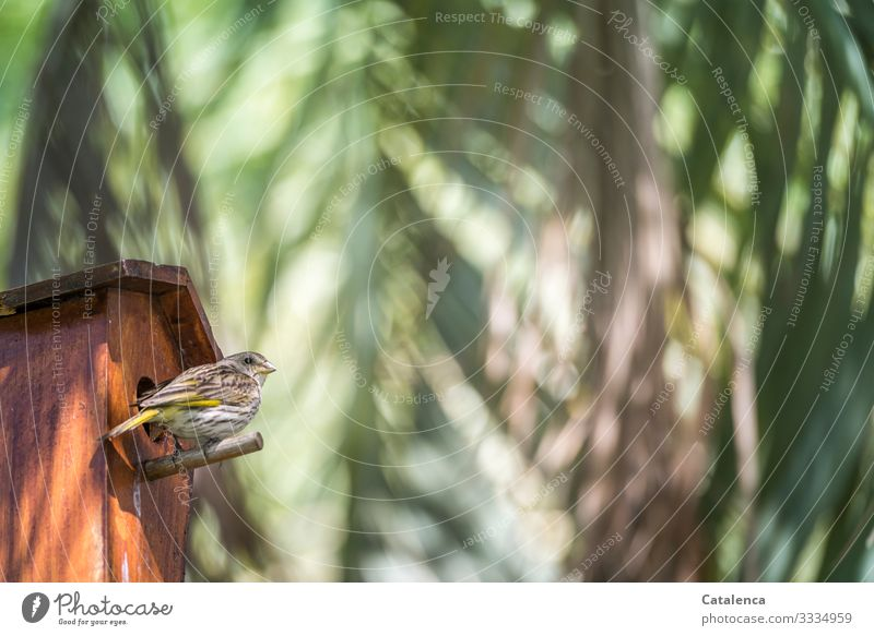 A sparrow sits in front of the birdhouse under palm leaves Animal Animal portrait Wild animal birds songbird Sparrow Plant Palm tree Palm leaf Brown Orange