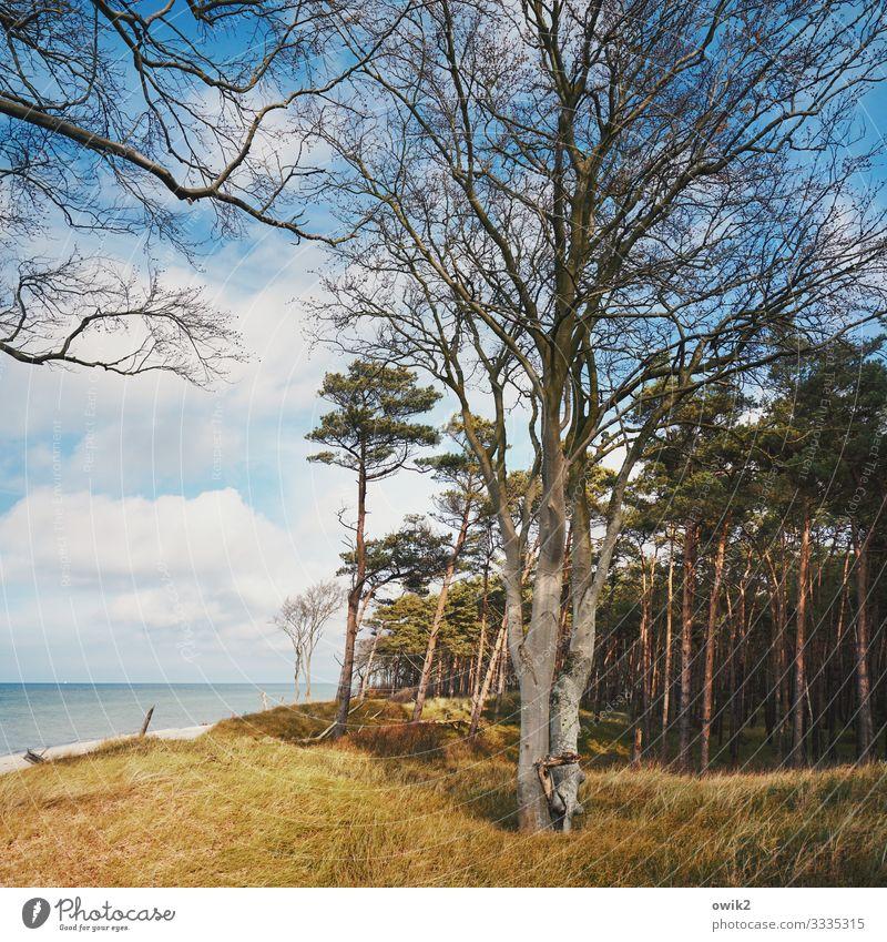 ramified Environment Nature Landscape Plant Water Sky Clouds Horizon Autumn Beautiful weather Tree Grass Bushes Wind cripple Coast Wood Large Tall Many Idyll
