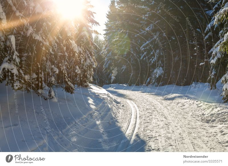 Winter forest in sunshine Vacation & Travel Tourism Snow Winter vacation Winter sports Ski run Nature Landscape Sun Sunlight Climate Beautiful weather Ice Frost