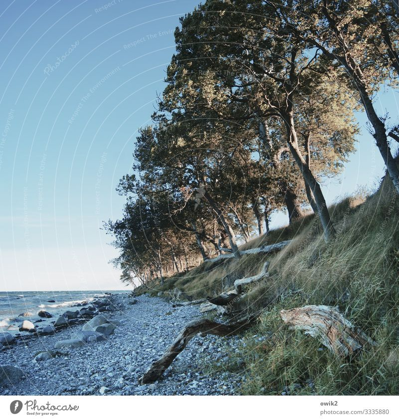 Inclined path Environment Nature Landscape Water Cloudless sky Horizon Autumn Wind Tree Grass Bushes Coast Beach Baltic Sea Island Fehmarn Pebble beach Wood