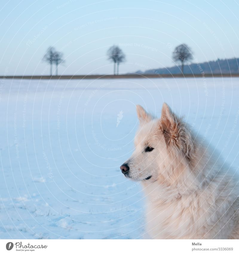 Nature Dog Blue White Landscape Animal Calm Environment Cold Snow Meadow Leisure and hobbies Ice Field Weather Wait