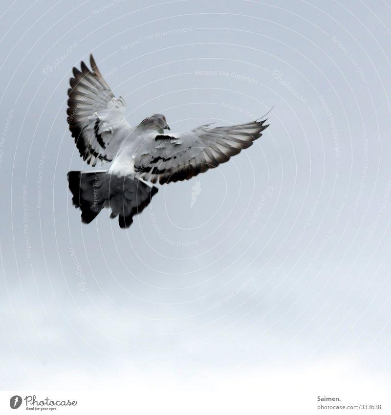 Sky Animal Freedom Bird Flying Wild animal Feather Wing Pigeon