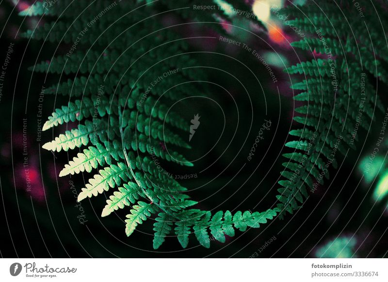 fern touch Environment Nature Plant Fern Forest Touch Rotate Growth Dark Natural Green Agreed Friendship Together Solidarity Attentive Calm Life Curiosity