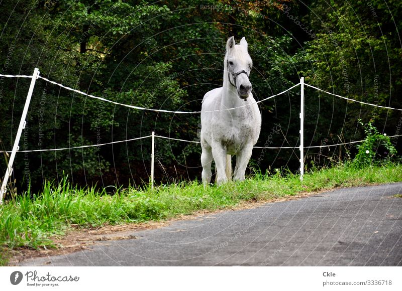Included Ride Equestrian sports Environment Nature Plant Tree Grass Meadow Pasture Street Lanes & trails Animal Farm animal Horse Animal face 1 Fence Observe