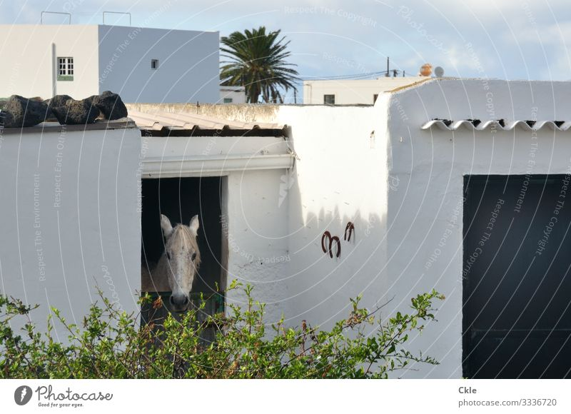stable Ride House (Residential Structure) Agriculture Forestry Environment Nature Weather Plant Bushes Palm tree Lanzarote Spain Village Barn Wall (barrier)