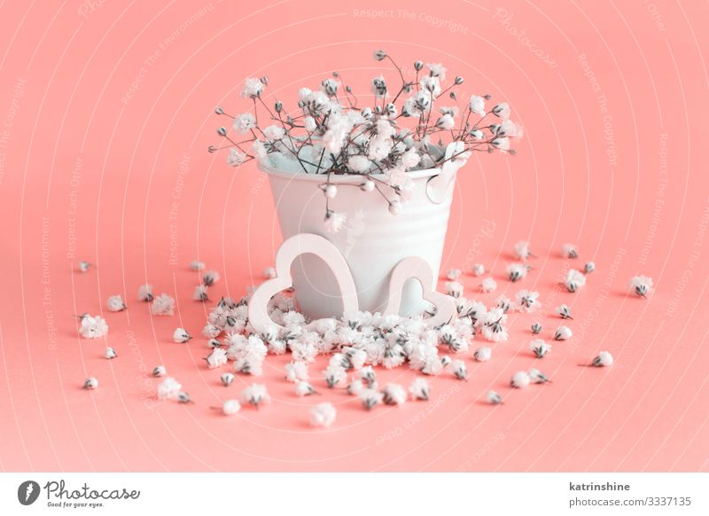 Small white flowers and hearts on a pink background Woman White Flower Adults Pink Design Decoration Heart Creativity Wedding Mother Conceptual design Bucket