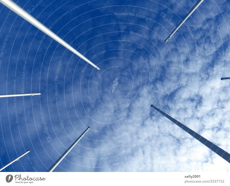 worm's-eye perspective... Sky Clouds Beautiful weather Free Infinity Tall Blue White Contentment Center point Perspective Irritation Upward Flagpole Rod